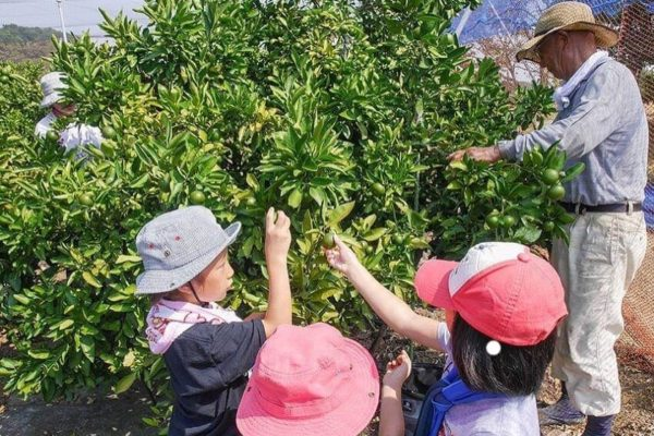 唐辛子畑にいる小学生たち