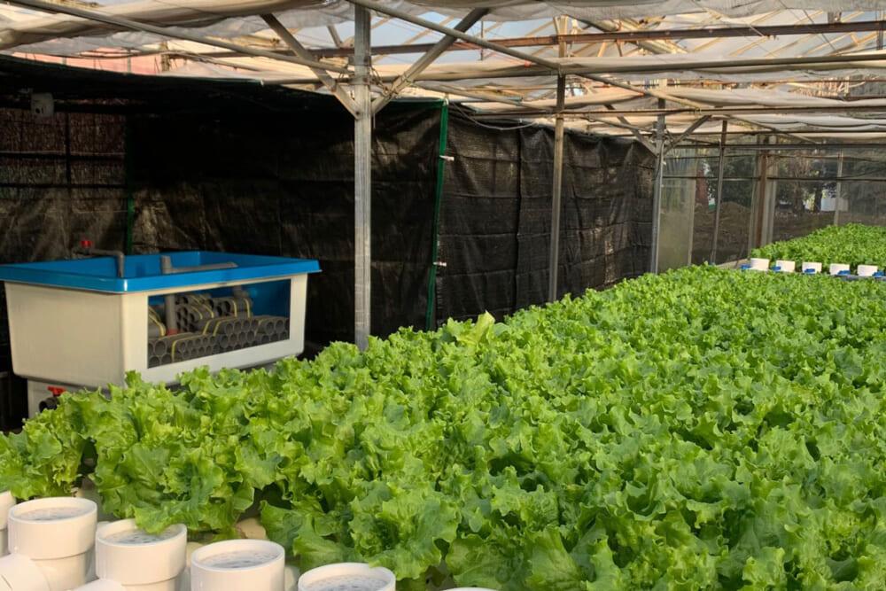 アクポニ農場